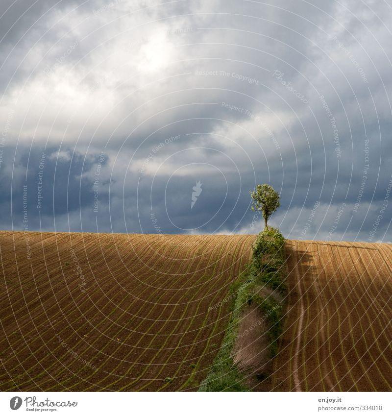 Grenzposten Landwirtschaft Forstwirtschaft Umwelt Natur Landschaft Pflanze Erde Sand Gewitterwolken schlechtes Wetter Unwetter Nutzpflanze Feld blau braun grün
