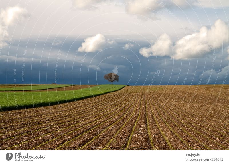 einsam Himmel Natur blau grün Pflanze Baum Einsamkeit Landschaft Wolken Umwelt Ferne dunkel Horizont braun Feld Erde
