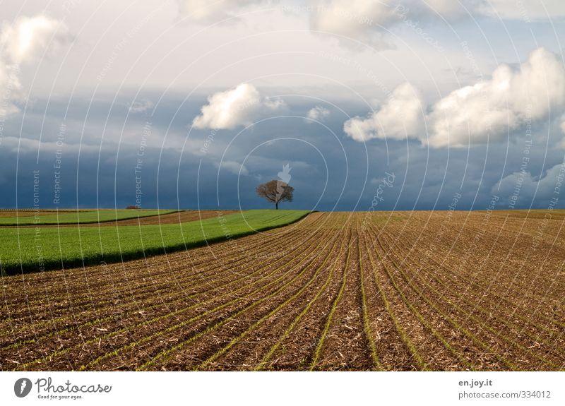 einsam Umwelt Natur Landschaft Pflanze Urelemente Erde Himmel Wolken Gewitterwolken schlechtes Wetter Unwetter Sturm Baum Nutzpflanze Feld bedrohlich dunkel