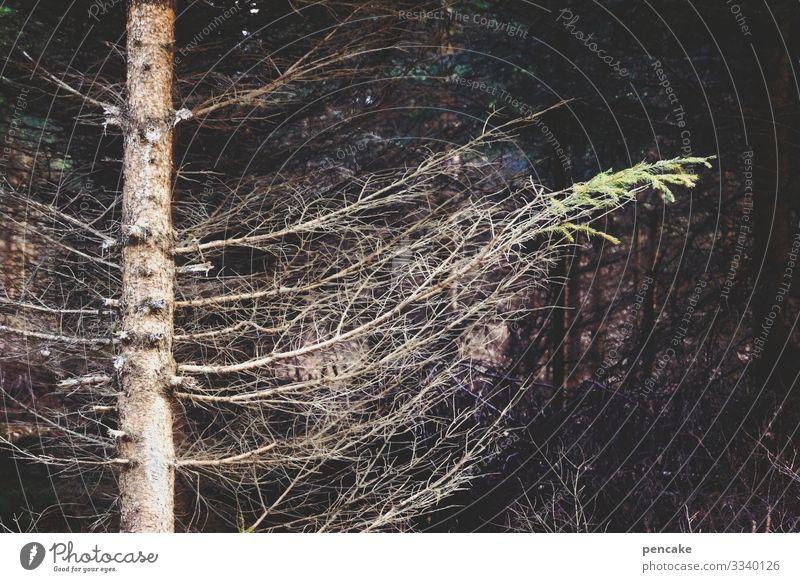 wink mir noch einmal zum abschied! Natur Winter Klimawandel Baum Wald Stimmung Trauer Tod winken Fichte Baumsterben Abschied gestikulieren Traurigkeit Nadelbaum