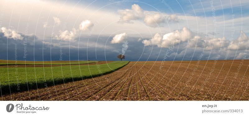 mittendrin statt ... blau grün Pflanze Landschaft ruhig Umwelt Ferne Leben Frühling Gesundheit Horizont braun Arbeit & Erwerbstätigkeit Feld Kraft Erde