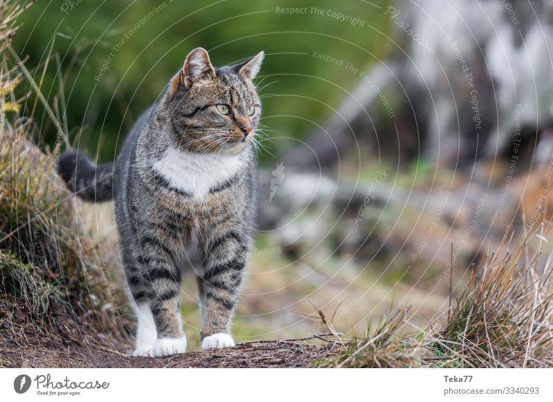 #Draußenkatze Winter Tier Haustier Katze ästhetisch Katzenauge Farbfoto Außenaufnahme