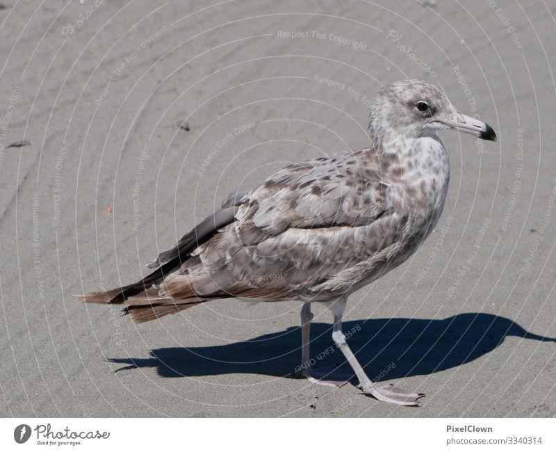 Möve Vogel Himmel fliegen Flügel Lachmöwe Strand Schnabel