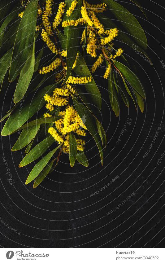 Blumenstrauß aus frischen gelben Frühlingsblumen Design Dekoration & Verzierung Feste & Feiern Natur Pflanze Blatt Blüte natürlich grün Kreativität Hintergrund