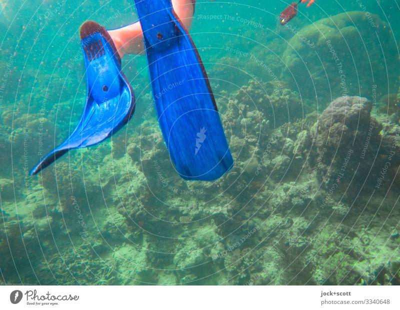 tauchen und schwimmen Schnorcheln Ausflug Beine Mensch Meer Pazifik Meeresboden Great Barrier Reef authentisch blau Stimmung Tatkraft erleben Verfall