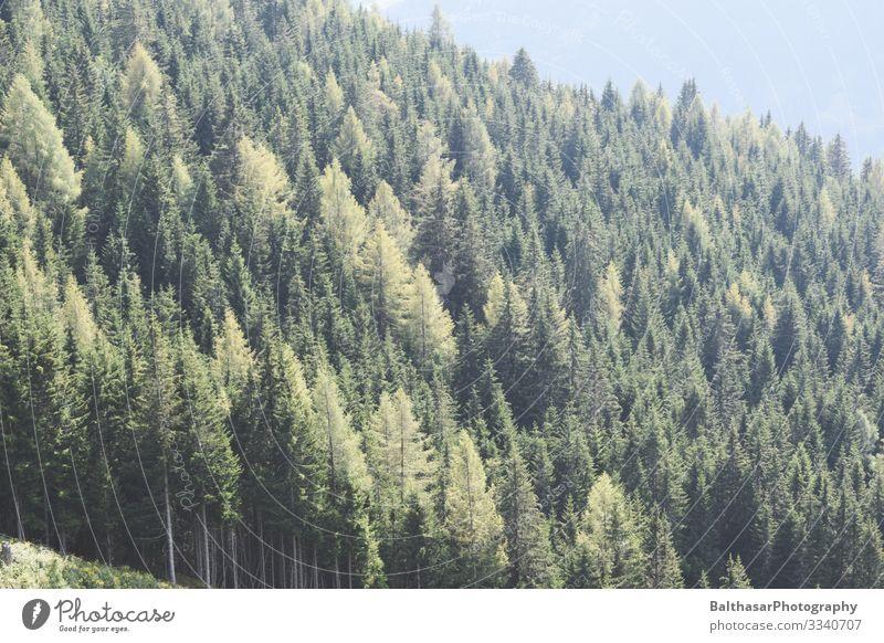 Wald im Dunst (Österreich) Sommer Berge u. Gebirge wandern Umwelt Natur Landschaft Pflanze Luft Sonne Sonnenlicht Wetter Nebel Wärme Baum Europa Menschenleer