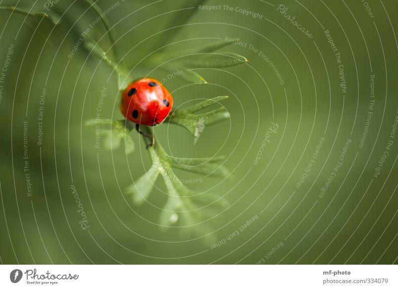 Nix wie weg hier... grün Pflanze rot Tier