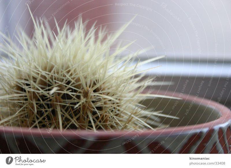 mein kleiner grüner Kaktus Fenster Aussicht stechen Zimmerpflanze