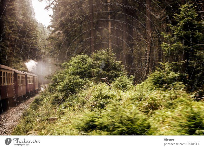 die Bahn fährt wieder Ausflug Berge u. Gebirge Bahnfahren Dampflokomotive Bewegung braun grün weiß historisch Wald Harz Sträucher Unterholz Gleise Wasserdampf