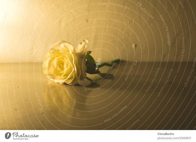 Stillleben mit Rose elegant Dekoration & Verzierung Blume Blüte ästhetisch außergewöhnlich einfach gelb Gefühle ruhig Dekadenz Nostalgie Vergänglichkeit