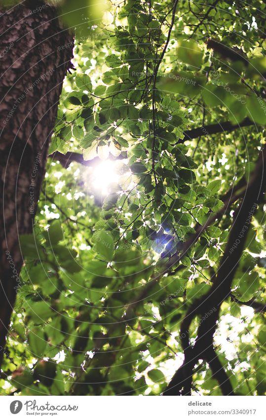 Blätterdach Wald Zweige u. Äste Natur Baum Außenaufnahme Menschenleer Blatt Pflanze Baumstamm grün Umwelt Herbst Landschaft braun Bokeh Waldspaziergang