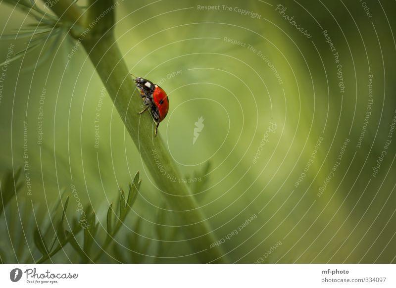 Ich muss hier hoch... Natur grün rot Frühling krabbeln Grünpflanze