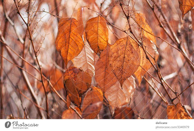 Herbst Farbfoto Lebensraum trocken mehrfarbig Schatten Kontrast Mischwald Laubbaum Jahreszeiten Spaziergang Pause Leichtigkeit herbstlich braun gelb Regen