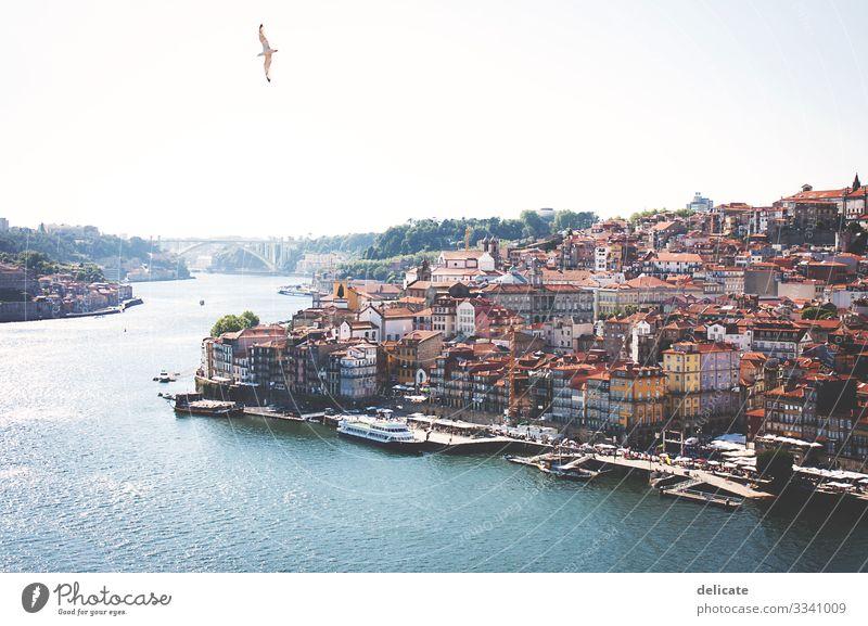 Porto Städtereise Städtebau Stadt Stadtzentrum Stadtteil Stadthaus Hafen Hafenstadt Portugal Douro Altstadt bunt Häuser Gebäude Architektur Möwe Freiheit
