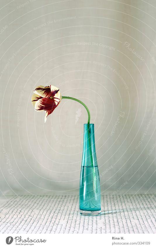 Eins Blume Tulpe Blumenstrauß Vase hell gelb rot türkis Stillleben Schriftzeichen Farbfoto Innenaufnahme Menschenleer Textfreiraum oben Textfreiraum Mitte