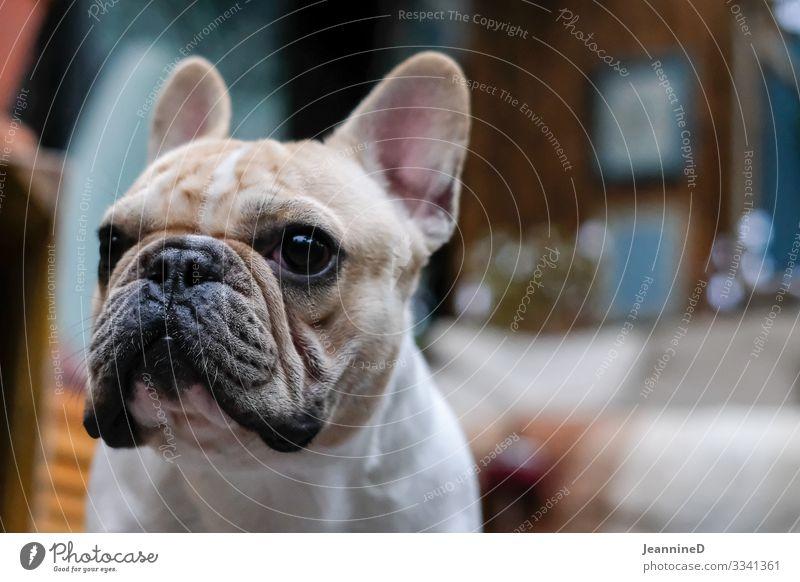 Hundeblick Lifestyle Freizeit & Hobby Ausflug Veterinär Hundesalon Arbeitslosigkeit Ruhestand Feierabend Tier Haustier 1 füttern gehen Blick Zusammensein