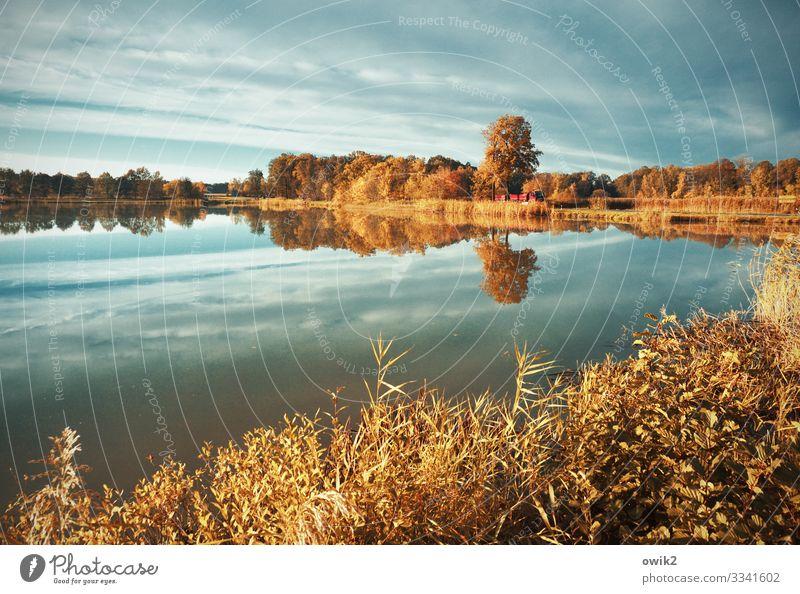 Ruhepol Umwelt Natur Landschaft Pflanze Luft Wasser Himmel Wolkenloser Himmel Horizont Herbst Schönes Wetter Baum Sträucher Seeufer Teich Straße Lastwagen ruhig