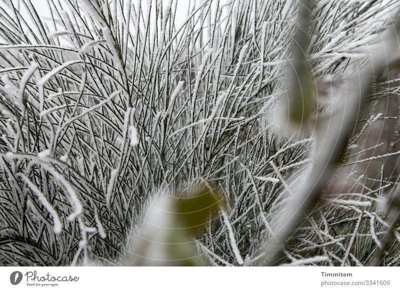 Eiszeit | Halme Umwelt Natur Pflanze Wasser Winter Frost Bach Schwabenland kalt natürlich grün weiß Gefühle Bachrand Farbfoto Außenaufnahme Menschenleer Tag