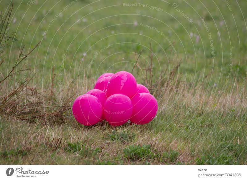 pink colored balloons in a meadow Natur Dekoration & Verzierung Luftballon rosa Celebration Meadow landscape copy space decoration gas balloon helium balloon