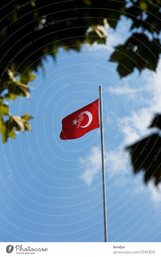 türkische Flagge Licht und Schatten Schönes Wetter Wind Ast Blätterdach Türkei Fahne authentisch blau grau grün rot weiß selbstbewußt Macht gefährlich Stolz