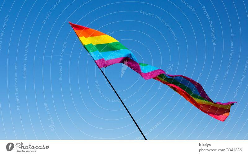 Alle unterm Regenbogen Wolkenloser Himmel Wind Fahne Regenbogenflagge regenbogenfarben leuchten ästhetisch authentisch Freundlichkeit frisch positiv blau