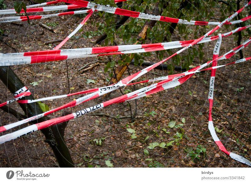 Tatort Klimawandel Wald Plastikband Kunststoff Zeichen Schriftzeichen Barriere Polizeiabsperrband authentisch rot weiß Macht Sicherheit Schutz uneinig