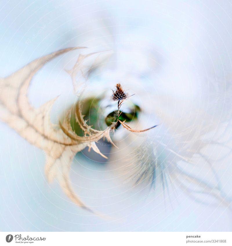eiszeit | überlebenstanz Natur Pflanze Blatt Winter Schnee Eis Kraft warten geheimnisvoll Frost Samen drehen Rätsel stachelig verblüht Überleben