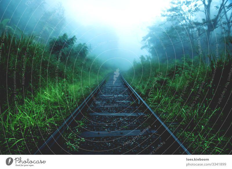 melancholy Ferien & Urlaub & Reisen Tourismus Abenteuer Sightseeing Natur Nebel Regen Pflanze Urwald Schienenverkehr Bahnfahren Gleise Traurigkeit wandern