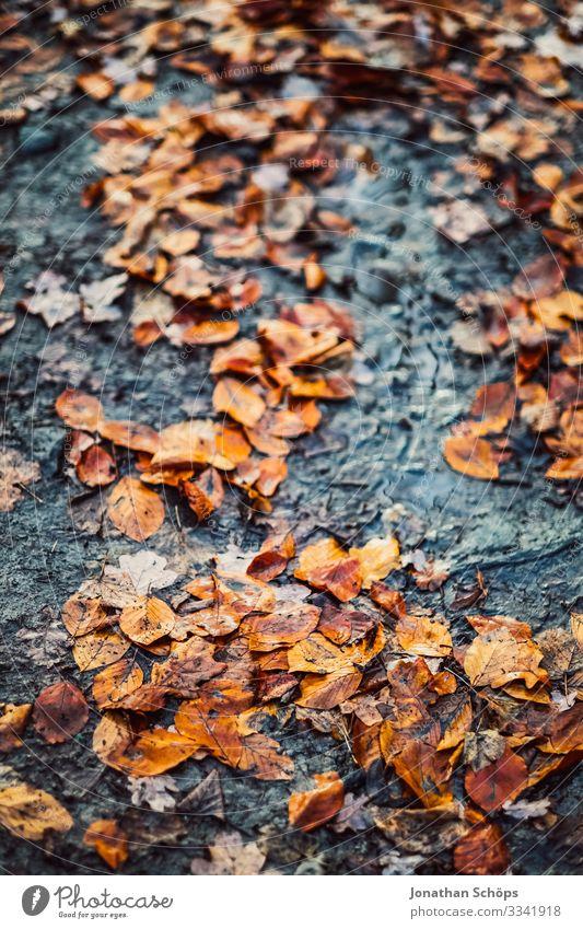 Herbstlaub auf dem Waldboden Abendsonne Dämmerung Farbigkeit Warmes Licht Abendsonnenlicht Hintergrundbild vergänglich Vergänglichkeit Jahreszeitenwechsel
