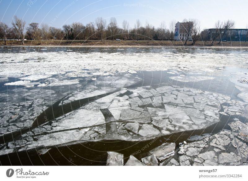 Eiszeit | nicht aktuell Umwelt Wasser Winter Schönes Wetter Frost Fluss Elbe blau schwarz weiß Eisscholle Flussufer Farbfoto Gedeckte Farben Außenaufnahme