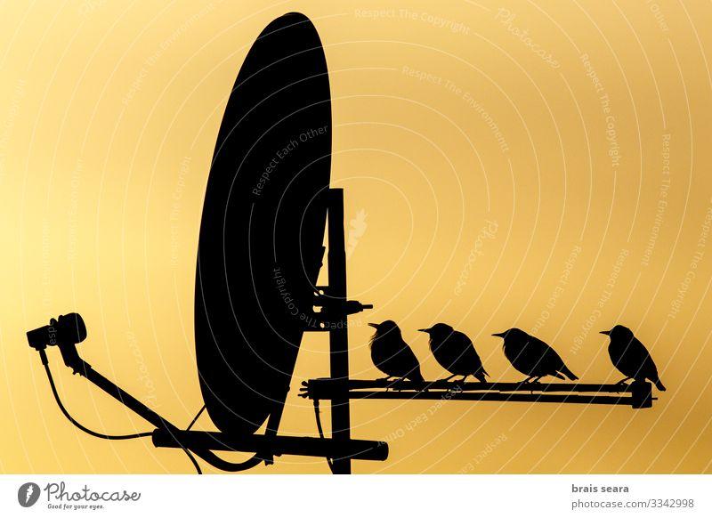 Himmel Natur Farbe schön Haus Tier schwarz gelb Umwelt natürlich Freiheit Vogel Häusliches Leben Freizeit & Hobby wild Europa