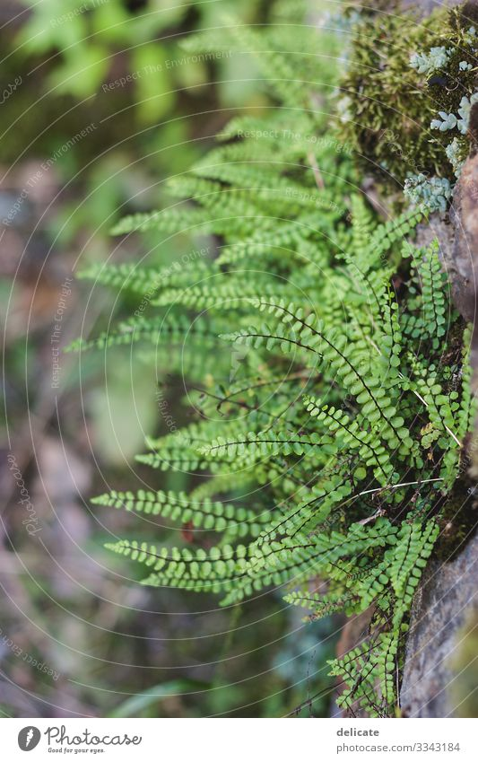 Green Forest Wald Waldboden Zweige u. Äste Natur Baum Außenaufnahme Menschenleer Blatt Pflanze Baumstamm grün Umwelt Herbst Landschaft braun Bokeh