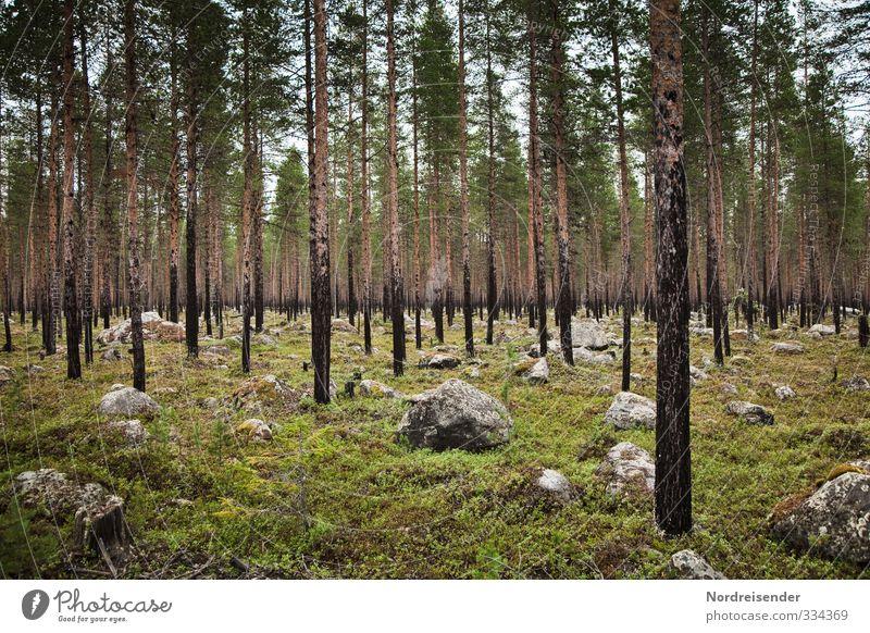 Findlinge Natur Baum Landschaft ruhig Wald Umwelt Felsen Stimmung Ordnung warten wandern Ausflug Landwirtschaft Duft Meditation nachhaltig