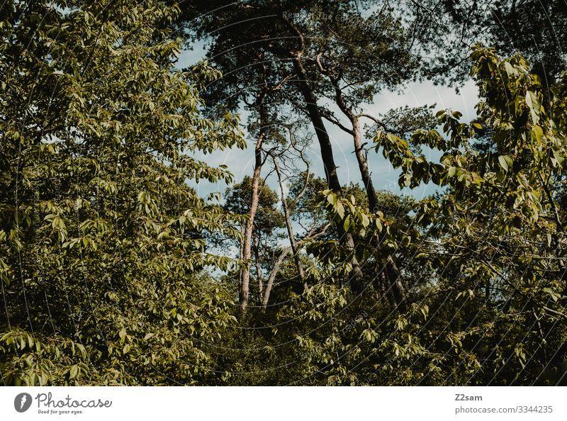 Baumkronen urwald Bayern baumkronen Bäume laubbäume Natur Landschaft Wald wild wachsen Grün Sommer natürlich öko saftig dicht bewachsen wuchern