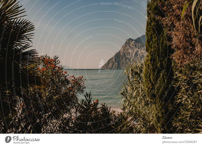 Surfer auf dem Gardasee | Riva del Garda gardasee italien norditalien sommer wasser berge wolken himmel schönes wetter wasserblau Berge u. Gebirge Farbfoto