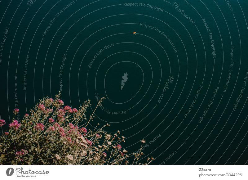 Schwimmer im Gardasee gardasee klippe von oben wasser gewässer schwimmen blumen natur vogelperspektive einsam weite größe dunkel Schwimmen & Baden Außenaufnahme