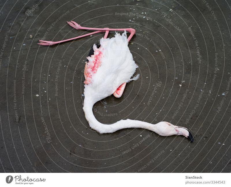 Toter Flamingo im Delta des Flusses Evros, Griechenland schön Körper Natur Tier Küste See Vogel natürlich wild rosa rot weiß Tod Farbe Tierwelt Hintergrund