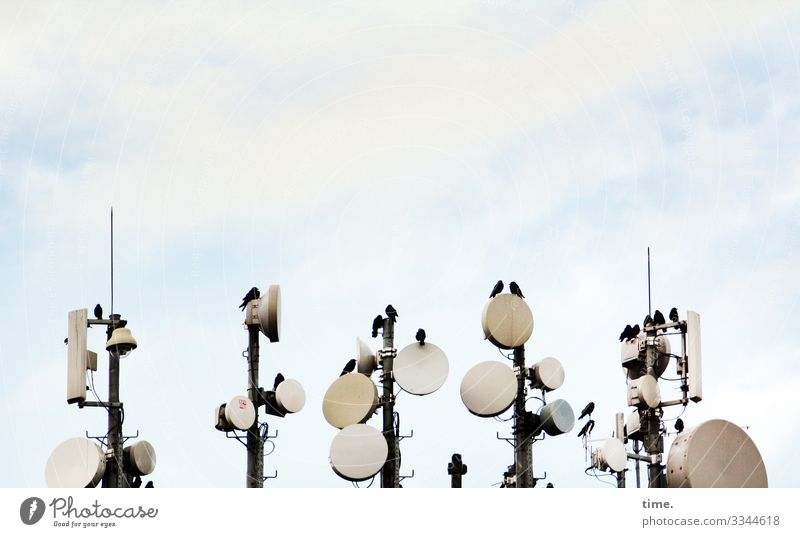 Meeting vögel satellitenschüssel dach himmel oben sitzen plaudern unterhalten sender empfang elektronik technik information versirgung transport übertragung