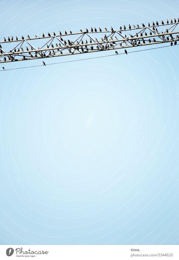 Stadtgiraffen (11), mit Publikum Baustelle Himmel Schönes Wetter Tier Vogel Schwarm Kran Metall Erholung sitzen Zusammensein Sicherheit Schutz Wachsamkeit Leben