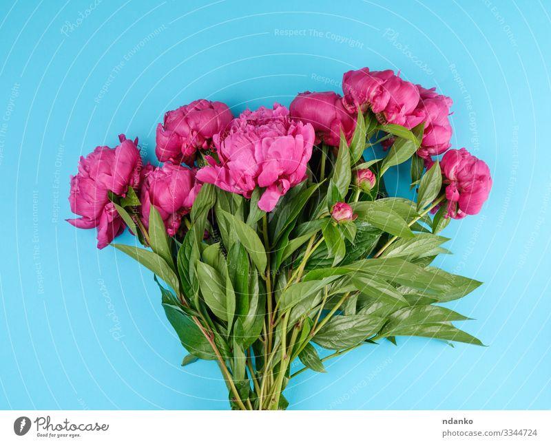 Strauß roter Pfingstrosen Design schön Sommer Dekoration & Verzierung Feste & Feiern Hochzeit Natur Pflanze Blume Blatt Blüte Blumenstrauß frisch natürlich blau