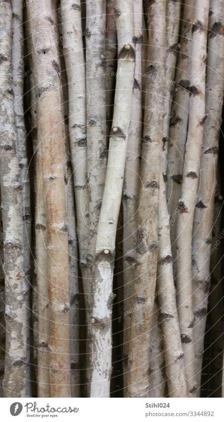 viele schlanke Birkenstämme nebeinander Natur Baum Wald Holz dunkel grau schwarz weiß standhaft Ordnungsliebe Zufriedenheit Birkenwald Baumstamm Schwarzweißfoto