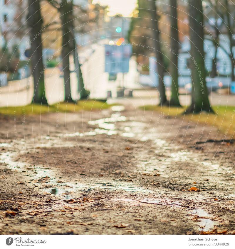 Weg am Waldrand nach einem Regen Abendsonne Chemnitz Deutschland Dämmerung Sachsen weg waldrand regen feucht regenwetter Morgen Küchwald bergab Außenaufnahme