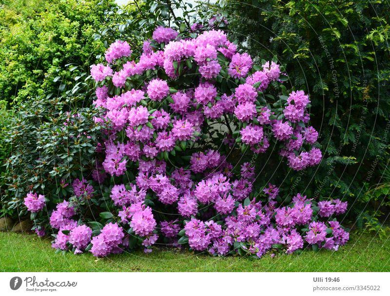 Das ist Quasidivadendron . . . . . (sagt time.) Sommer Pflanze Stadt grün Blume Erholung ruhig Blüte natürlich Garten Wachstum ästhetisch Schönes Wetter Blühend