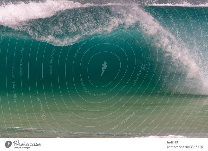 Türkisfarbige Welle mit Hohlraum die sich bricht Wasser Sommer Schönes Wetter Wellen Meer Wellengang Gischt türkis Brandung Schaum ästhetisch bedrohlich elegant