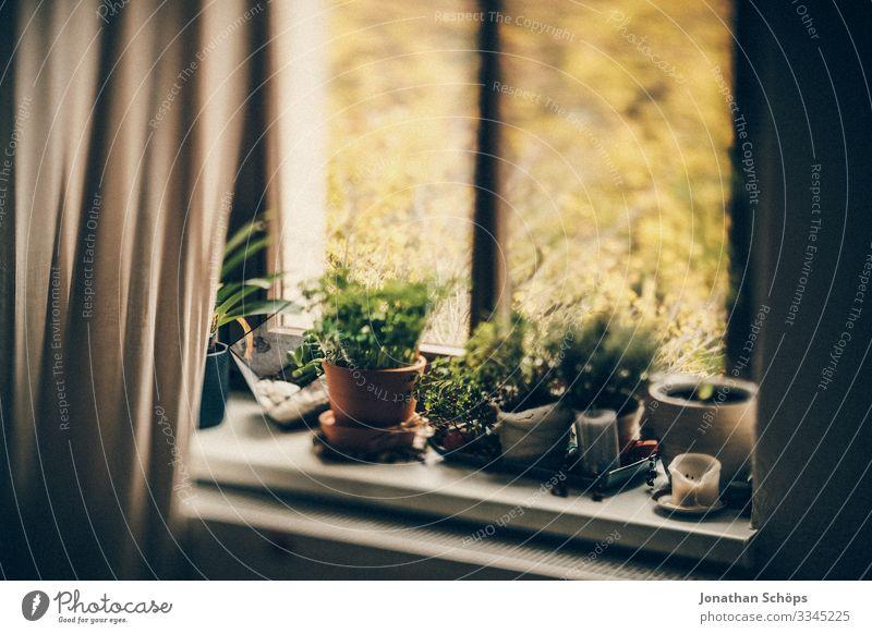 Topfpflanzen aus dem Fensterbrett im Home Office Büro Innenbereich Arbeitsplatz Heimarbeitsplatz Homeoffice Arbeit & Erwerbstätigkeit Fensterblick Quarantäne