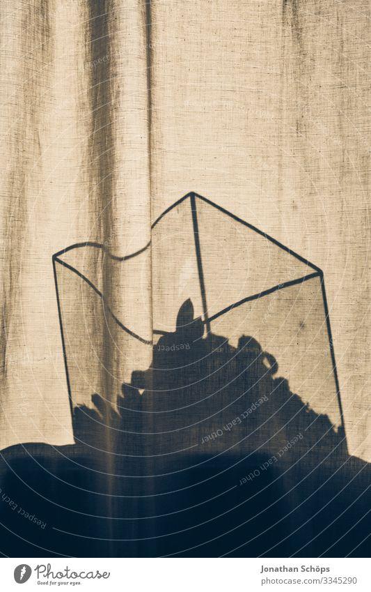 Glaskasten mit Kaktus Pflanze steht hinter einer Gardine im Sonnenlicht Silhouette Schatten Grundriss Gerichte Minimalismus Abstrakter schwarzer Hintergrund