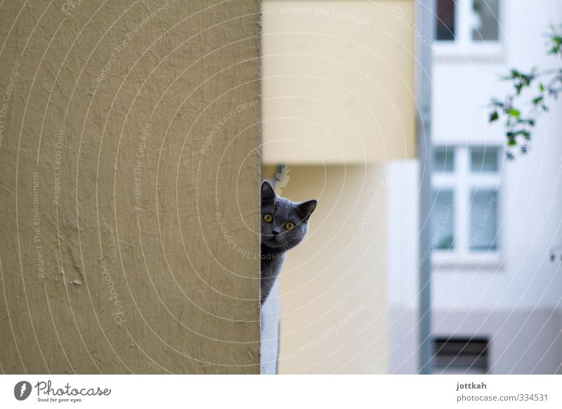 Da guckste Tier Haustier Katze 1 Neugier Langeweile Angst Schüchternheit Balkon Kopf Ecke um die Ecke Ohr Blick hypnotisch Voyeurismus verheimlichen beobachten
