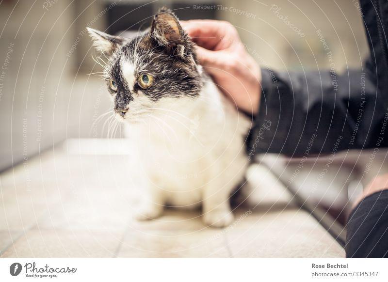 Katze beim Tierarzt Hand Haustier 1 festhalten warten Krankheit gelb schwarz weiß Vertrauen Tierliebe Verantwortung Veterinär Gedeckte Farben Innenaufnahme