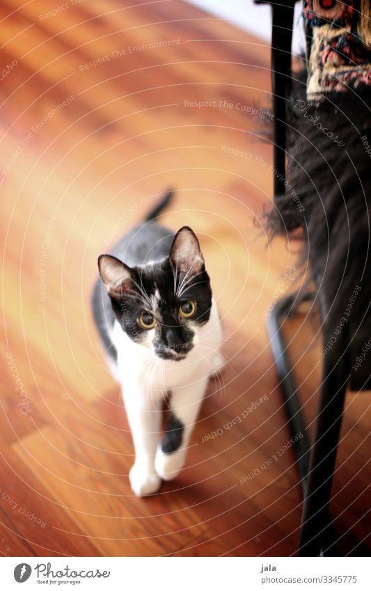 junge Tier Haustier Katze 1 Tierjunges Neugier niedlich Tierliebe Farbfoto Innenaufnahme Menschenleer Tag Tierporträt Blick nach vorn