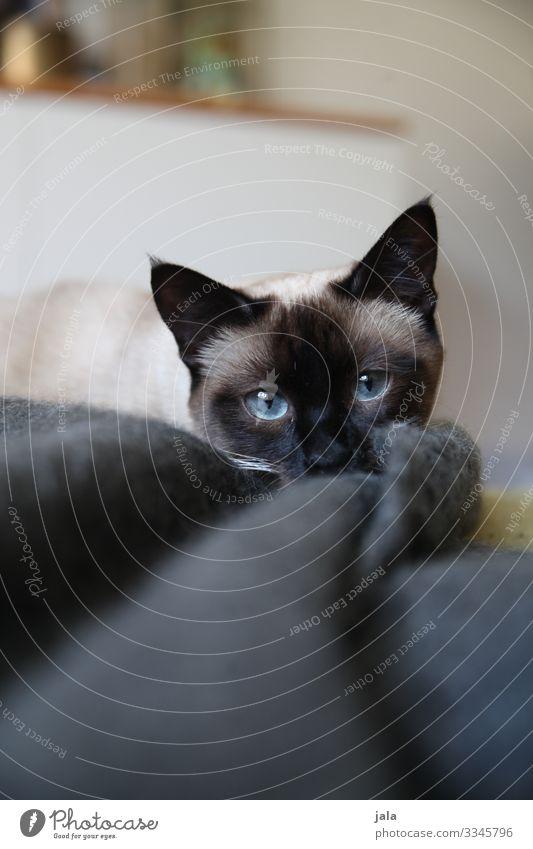 mädsche Tier Haustier Katze 1 Tierjunges Neugier niedlich Sympathie Tierliebe Farbfoto Innenaufnahme Menschenleer Tag Tierporträt Blick Blick in die Kamera
